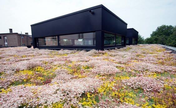 Groen dak met siergrassen